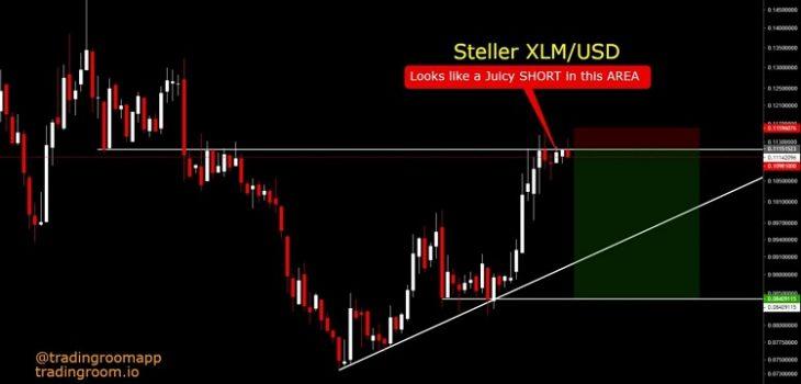 Steller XL- USD